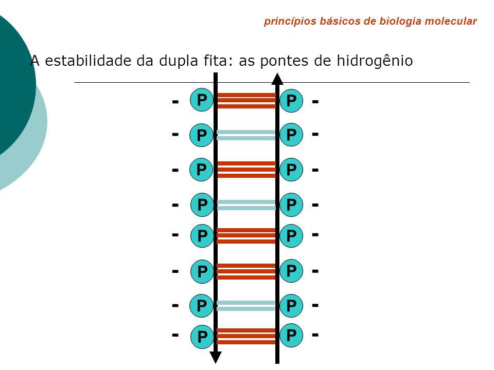 princípios básicos de biologia molecular A estabilidade da dupla fita: as pontes de hidrogênio P P P P P P P P P P P P P P PP - - - - - - - - - - - -