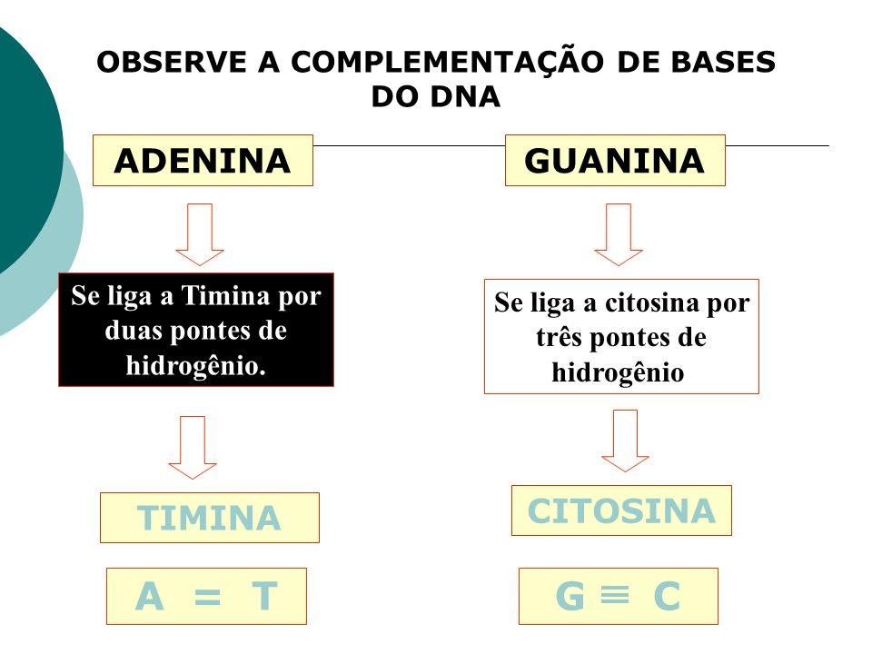 OBSERVE A COMPLEMENTAÇÃO DE BASES DO DNA ADENINA TIMINA Se liga a Timina por duas pontes de hidrogênio. A = T GUANINA CITOSINA Se liga a citosina por