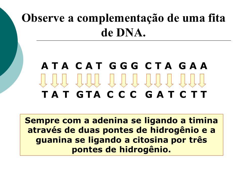 Observe a complementação de uma fita de DNA. A T A C A T G G G C T A G A A TTTTTTGGCCCCAAA Sempre com a adenina se ligando a timina através de duas po