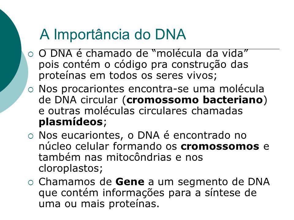 A Importância do DNA O DNA é chamado de molécula da vida pois contém o código pra construção das proteínas em todos os seres vivos; Nos procariontes e
