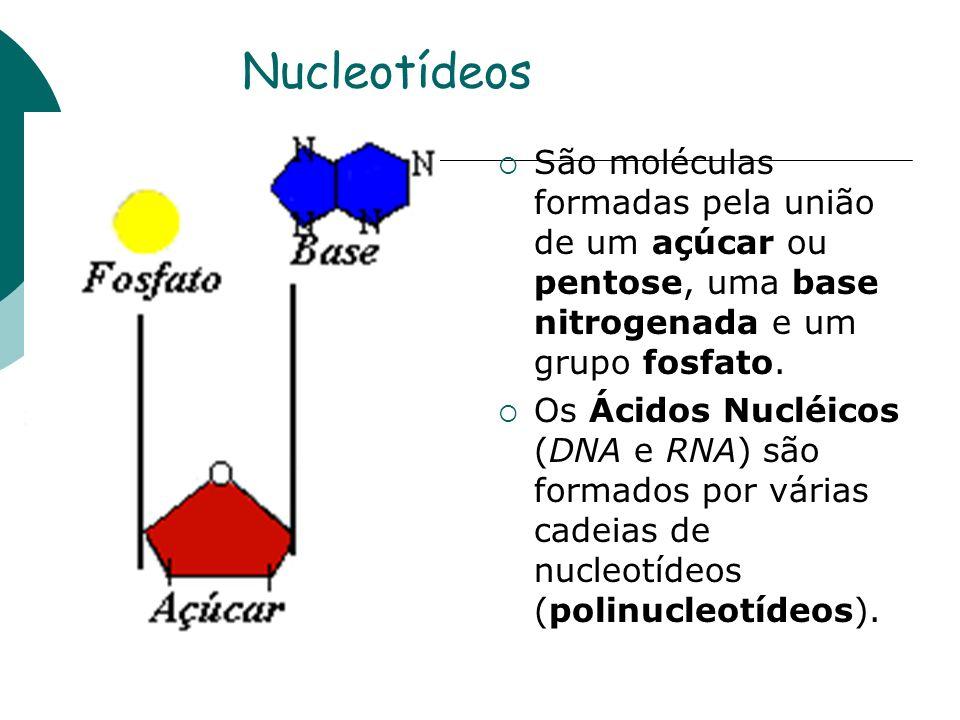 Nucleotídeos São moléculas formadas pela união de um açúcar ou pentose, uma base nitrogenada e um grupo fosfato. Os Ácidos Nucléicos (DNA e RNA) são f