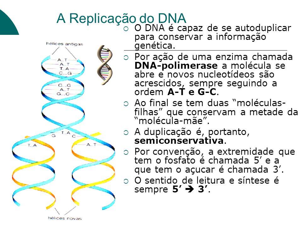A Replicação do DNA O DNA é capaz de se autoduplicar para conservar a informação genética. Por ação de uma enzima chamada DNA-polimerase a molécula se