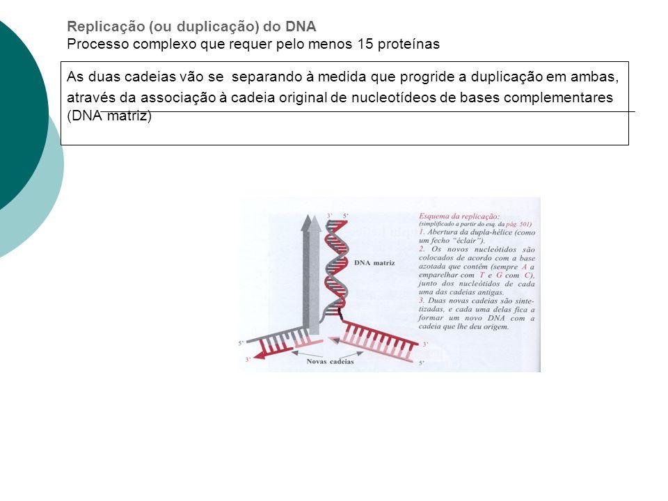 Replicação (ou duplicação) do DNA Processo complexo que requer pelo menos 15 proteínas As duas cadeias vão se separando à medida que progride a duplic