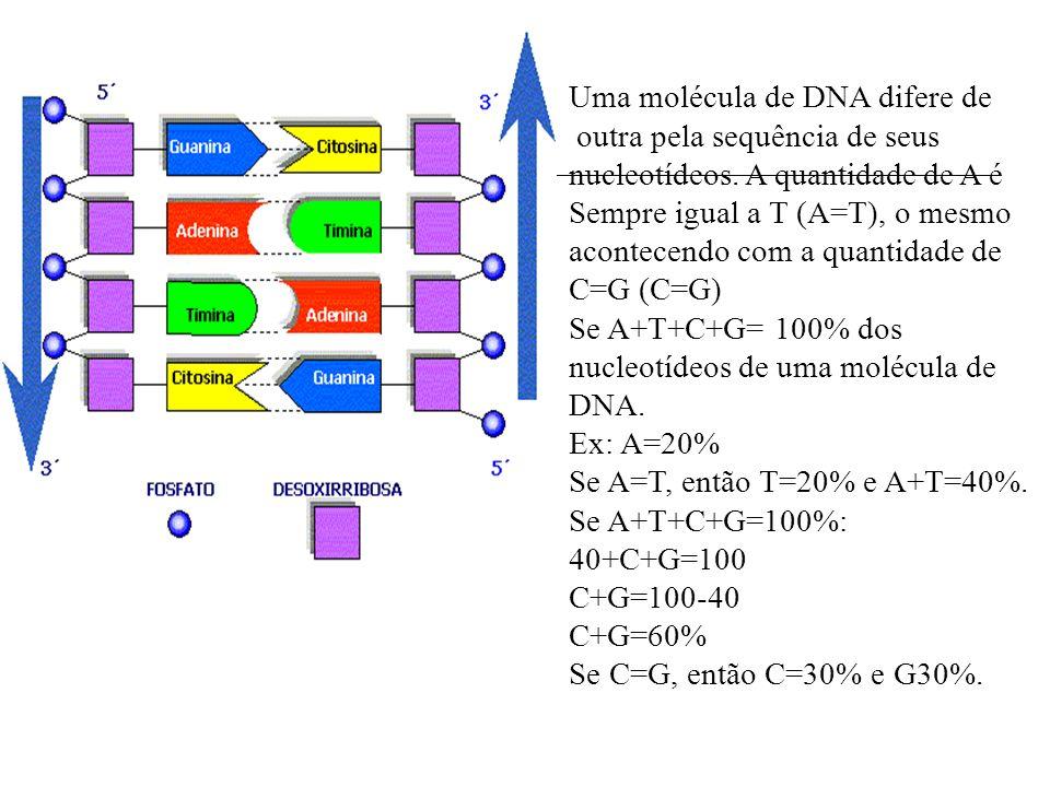 Uma molécula de DNA difere de outra pela sequência de seus nucleotídeos. A quantidade de A é Sempre igual a T (A=T), o mesmo acontecendo com a quantid