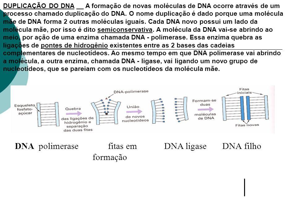 DUPLICAÇÃO DO DNA __ A formação de novas moléculas de DNA ocorre através de um processo chamado duplicação do DNA. O nome duplicação é dado porque uma
