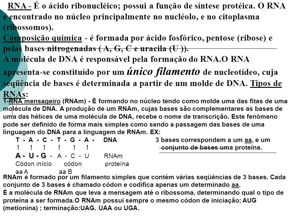 RNA - É o ácido ribonucléico; possui a função de síntese protéica. O RNA é encontrado no núcleo principalmente no nucléolo, e no citoplasma (ribossomo