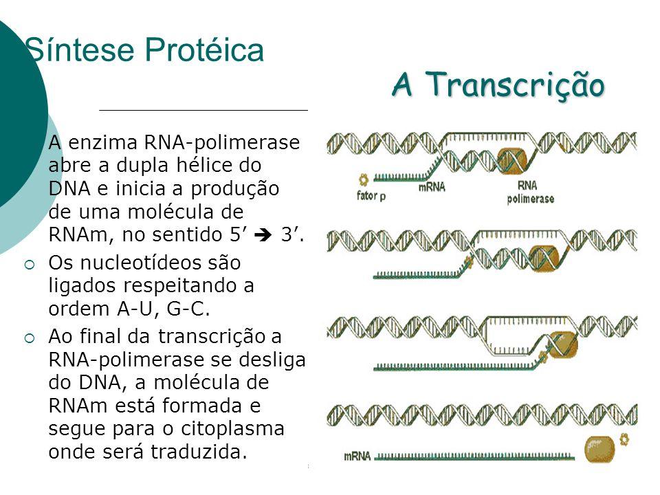 Síntese Protéica A enzima RNA-polimerase abre a dupla hélice do DNA e inicia a produção de uma molécula de RNAm, no sentido 5 3. Os nucleotídeos são l