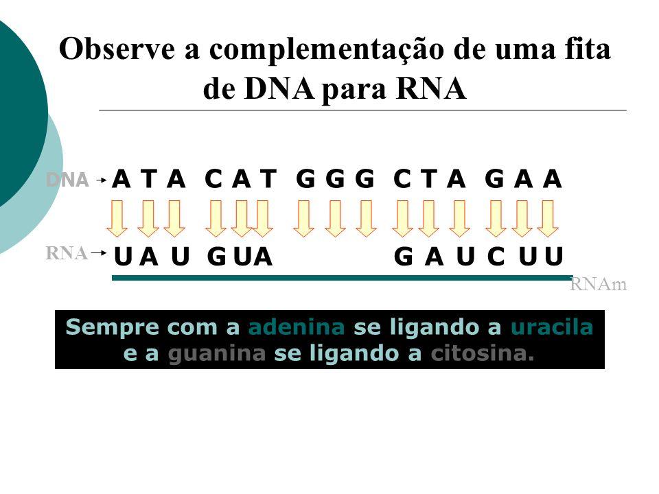 Observe a complementação de uma fita de DNA para RNA A T A C A T G G G C T A G A A UUUUUUGGCCCCAAA Sempre com a adenina se ligando a uracila e a guani