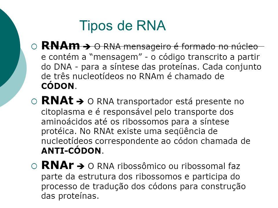 Tipos de RNA RNAm O RNA mensageiro é formado no núcleo e contém a mensagem - o código transcrito a partir do DNA - para a síntese das proteínas. Cada