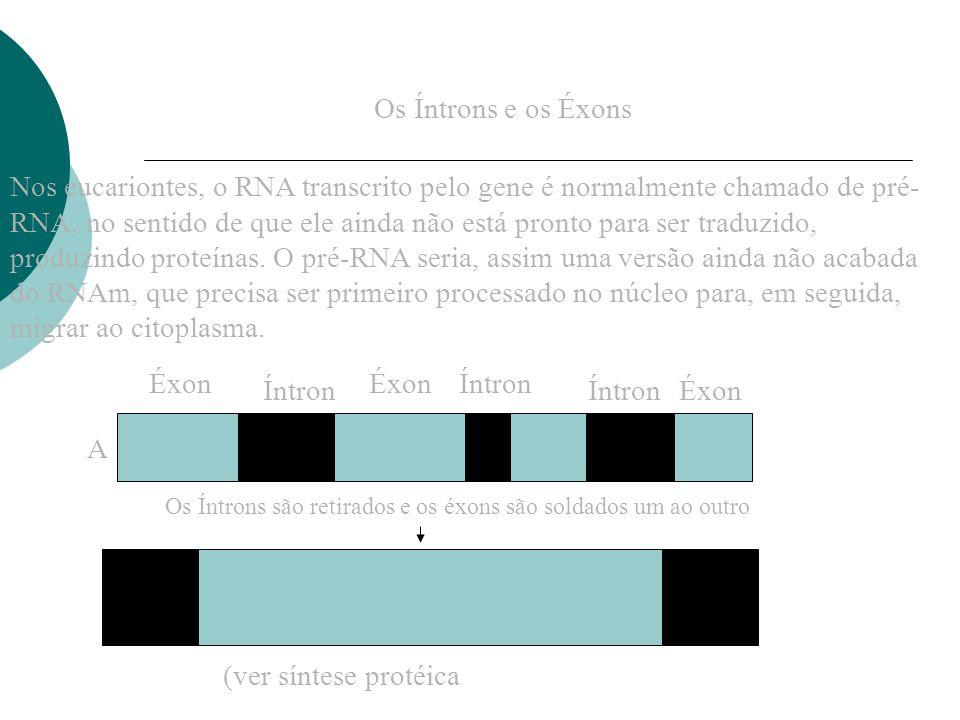 Os Íntrons e os Éxons Nos eucariontes, o RNA transcrito pelo gene é normalmente chamado de pré- RNA, no sentido de que ele ainda não está pronto para