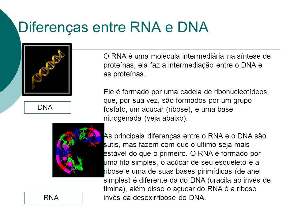 Diferenças entre RNA e DNA O RNA é uma molécula intermediária na síntese de proteínas, ela faz a intermediação entre o DNA e as proteínas. Ele é forma