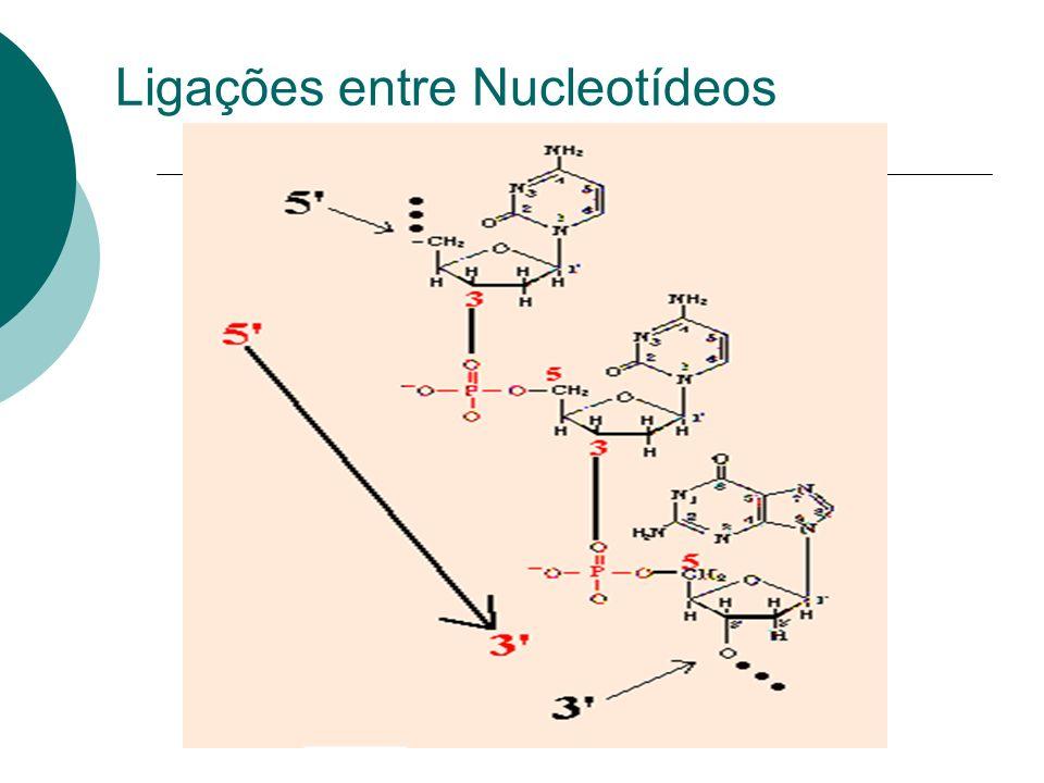 Ligações entre Nucleotídeos
