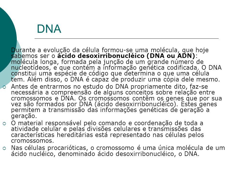 DNA Durante a evolução da célula formou-se uma molécula, que hoje sabemos ser o ácido desoxirribonucléico (DNA ou ADN): molécula longa, formada pela j