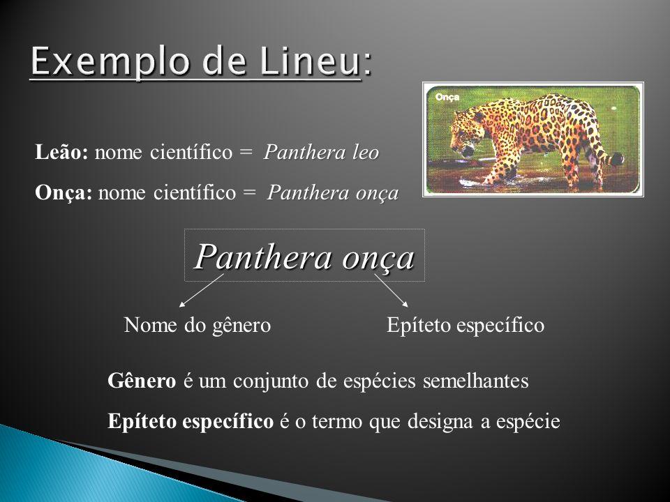 Panthera leo Leão: nome científico = Panthera leo Panthera onça Onça: nome científico = Panthera onça Panthera onça Nome do gêneroEpíteto específico G
