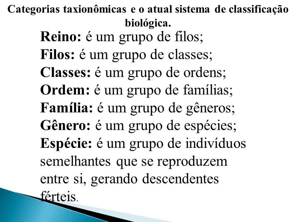 Categorias taxionômicas e o atual sistema de classificação biológica. Reino: é um grupo de filos; Filos: é um grupo de classes; Classes: é um grupo de