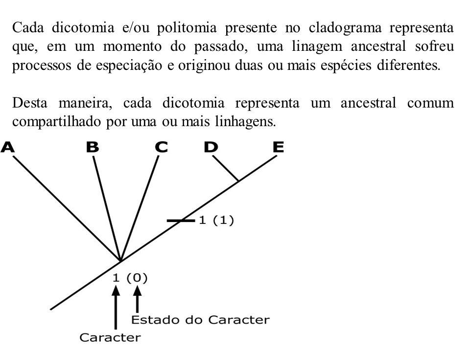 Cada dicotomia e/ou politomia presente no cladograma representa que, em um momento do passado, uma linagem ancestral sofreu processos de especiação e