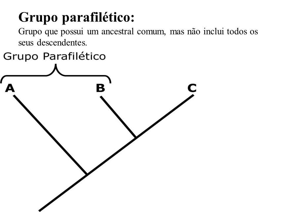 Grupo parafilético: Grupo que possui um ancestral comum, mas não inclui todos os seus descendentes.