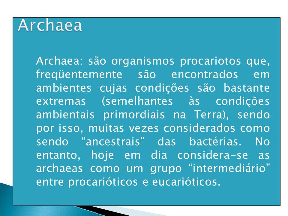 Archaea: são organismos procariotos que, freqüentemente são encontrados em ambientes cujas condições são bastante extremas (semelhantes às condições a