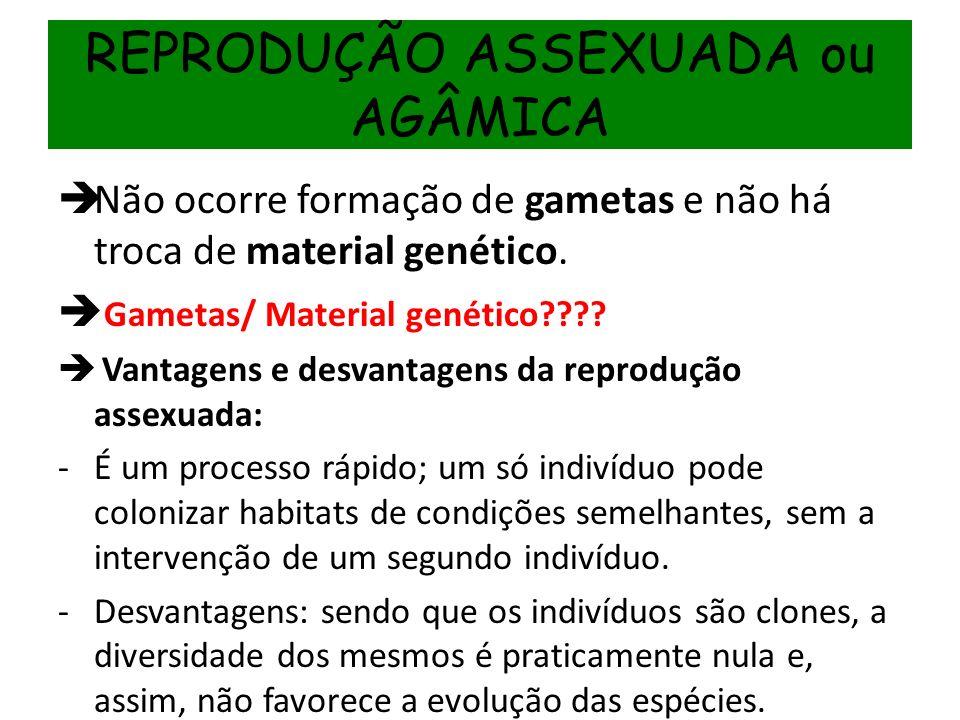 REPRODUÇÃO ASSEXUADA ou AGÂMICA Não ocorre formação de gametas e não há troca de material genético. Gametas/ Material genético???? Vantagens e desvant