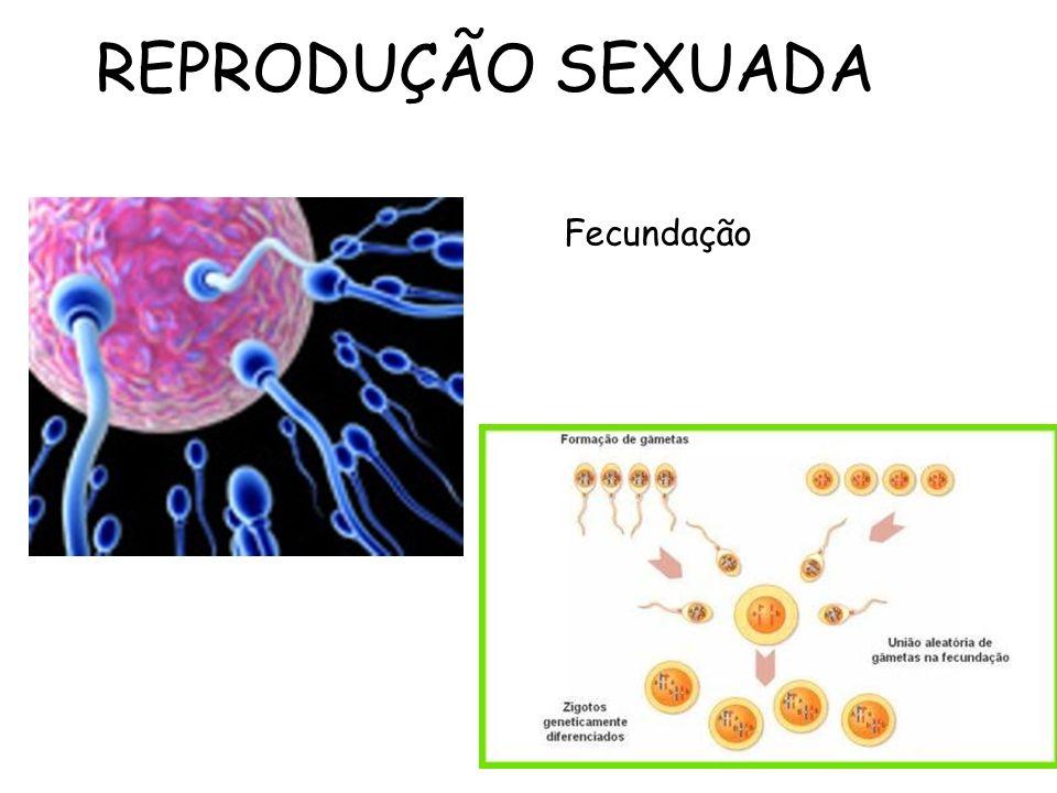 REPRODUÇÃO SEXUADA Fecundação