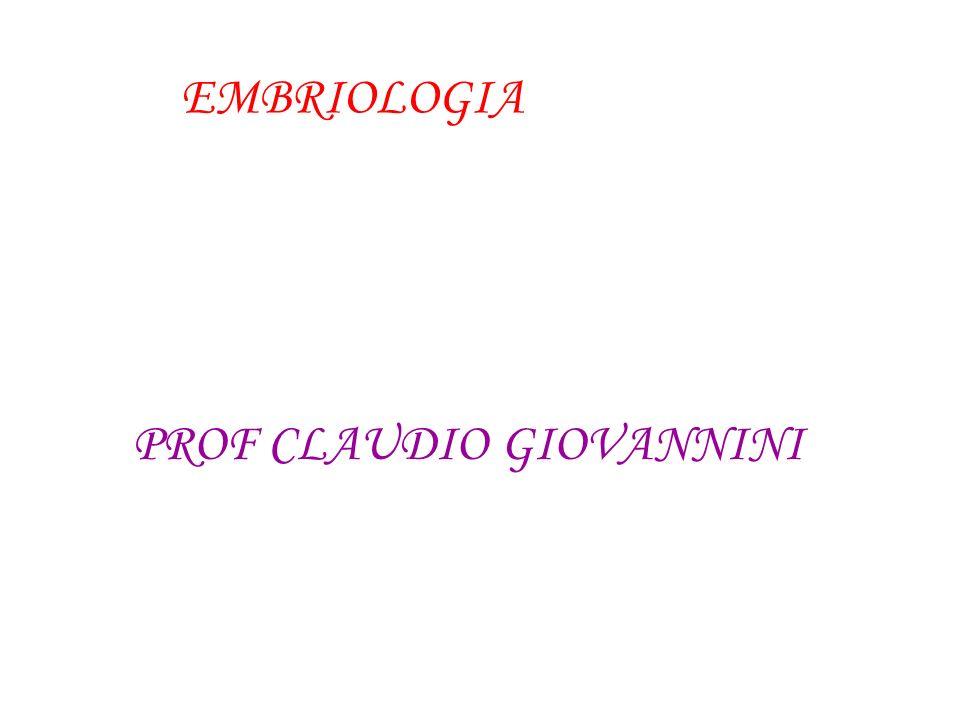 Blastóporo-------- Boca------ Ânus------ Protostômio Deuterostômio Cnidários, Platelmintos, Nematelmintos, Anelídeos, Moluscos e Artrópodes.