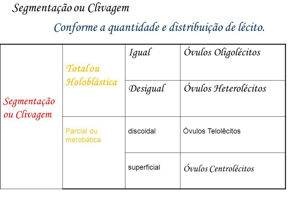 Segmentação ou Clivagem lécito. Conforme a quantidade e distribuição de lécito. Segmentação ou Clivagem Total ou Holoblástica IgualÓvulos Oligolécitos
