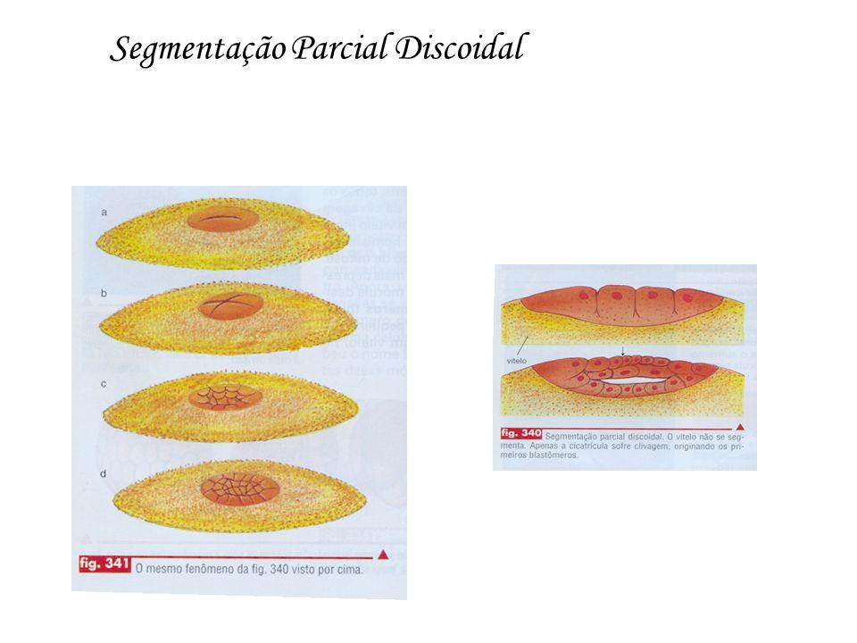 Segmentação Parcial Discoidal