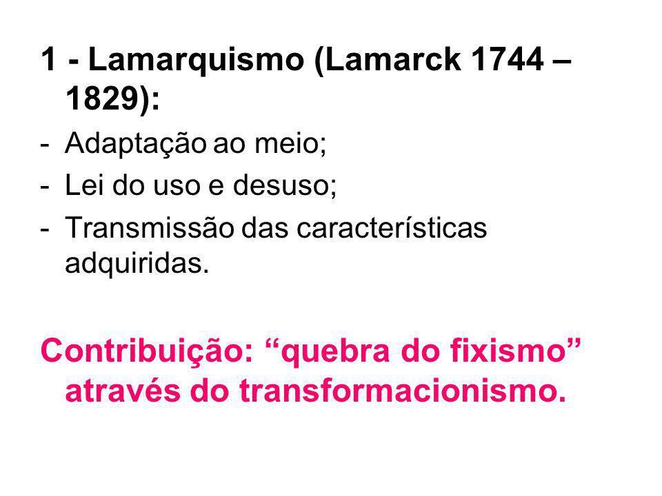 1 - Lamarquismo (Lamarck 1744 – 1829): -Adaptação ao meio; -Lei do uso e desuso; -Transmissão das características adquiridas. Contribuição: quebra do