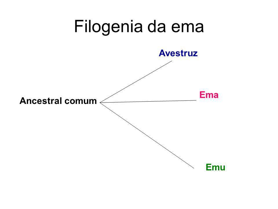 Filogenia da ema Ancestral comum Avestruz Ema Emu