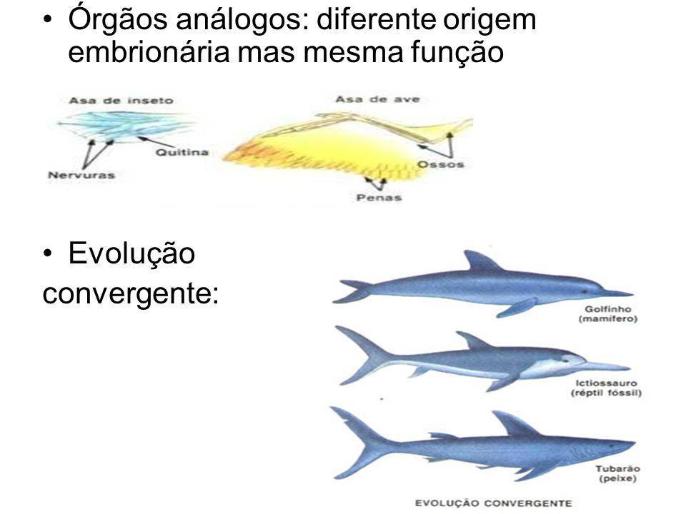 Órgãos análogos: diferente origem embrionária mas mesma função Evolução convergente: