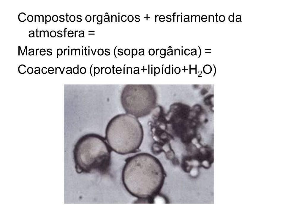 Compostos orgânicos + resfriamento da atmosfera = Mares primitivos (sopa orgânica) = Coacervado (proteína+lipídio+H 2 O)