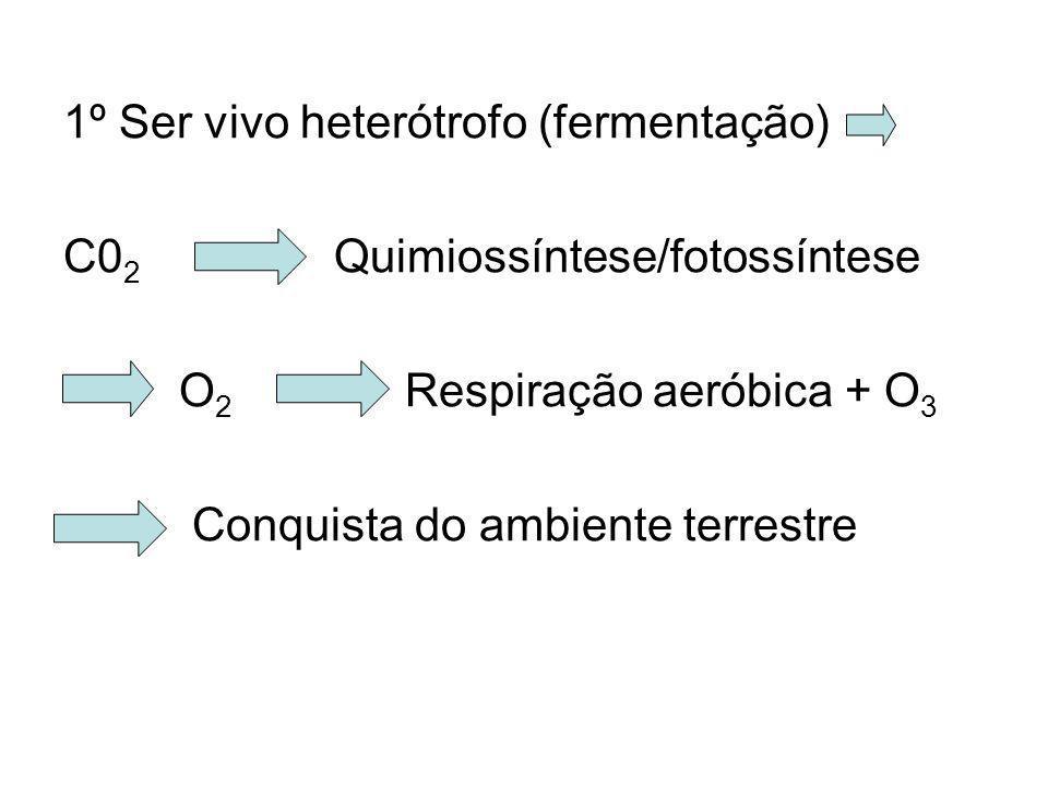 1º Ser vivo heterótrofo (fermentação) C0 2 Quimiossíntese/fotossíntese O 2 Respiração aeróbica + O 3 Conquista do ambiente terrestre
