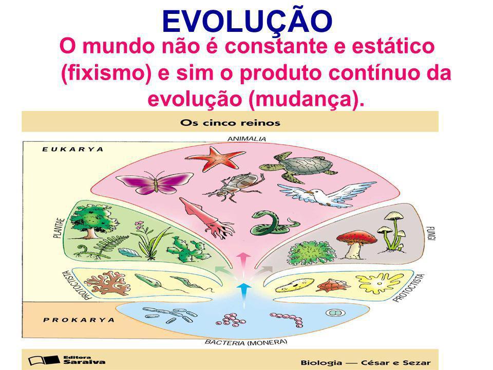 EVOLUÇÃO O mundo não é constante e estático (fixismo) e sim o produto contínuo da evolução (mudança).