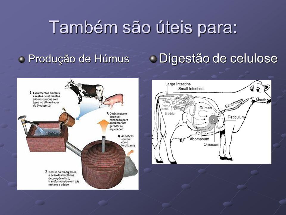 Também são úteis para: Produção de Húmus Digestão de celulose