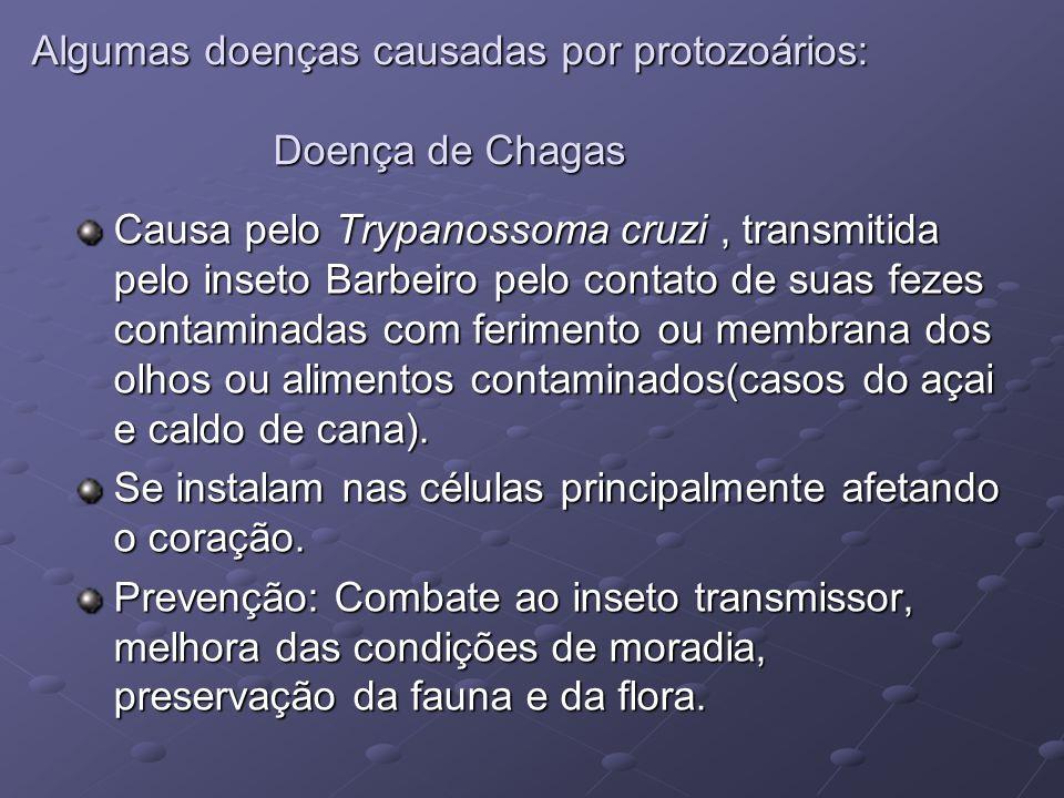 Algumas doenças causadas por protozoários: Doença de Chagas Causa pelo Trypanossoma cruzi, transmitida pelo inseto Barbeiro pelo contato de suas fezes