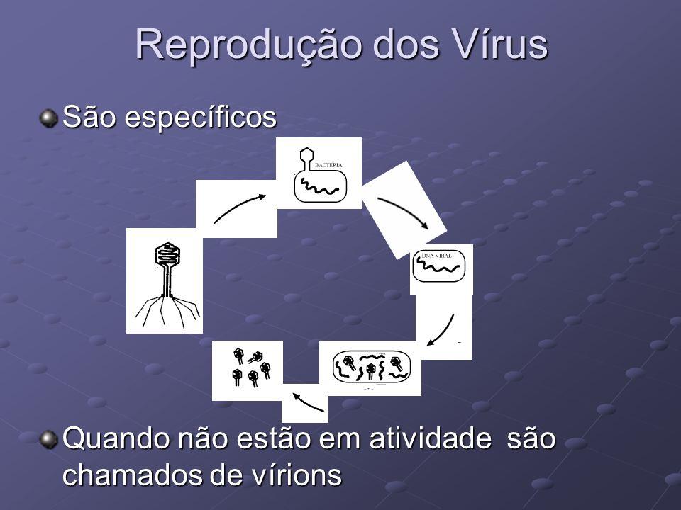 Reprodução dos Vírus São específicos Quando não estão em atividade são chamados de vírions