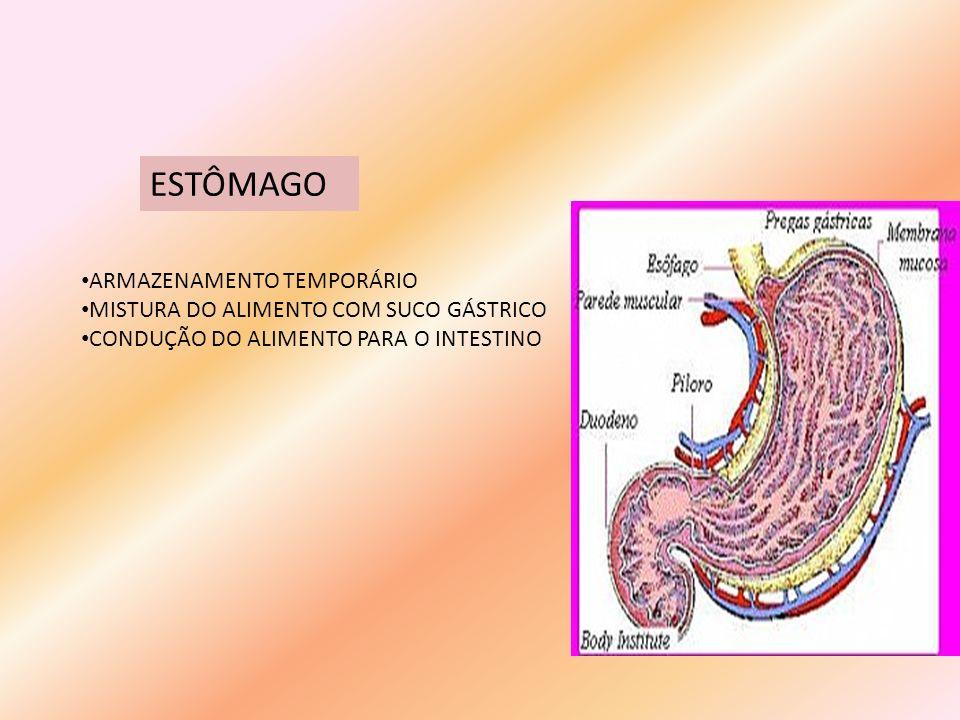 ESTÔMAGO ARMAZENAMENTO TEMPORÁRIO MISTURA DO ALIMENTO COM SUCO GÁSTRICO CONDUÇÃO DO ALIMENTO PARA O INTESTINO