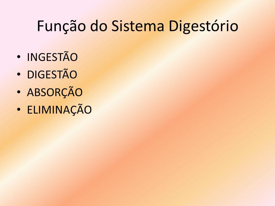 Função do Sistema Digestório INGESTÃO DIGESTÃO ABSORÇÃO ELIMINAÇÃO