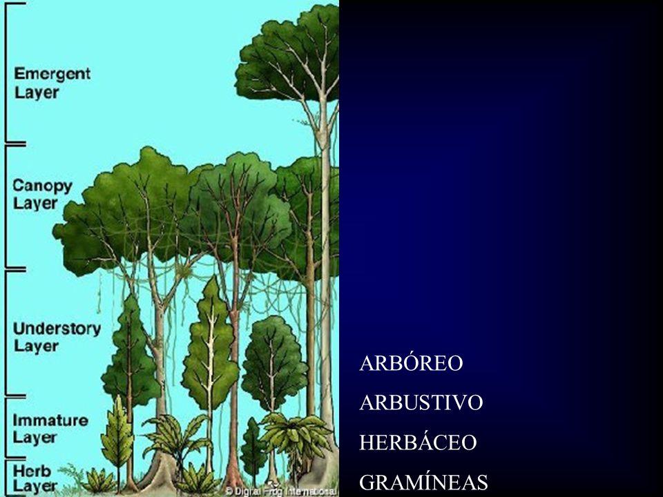 ARBÓREO ARBUSTIVO HERBÁCEO GRAMÍNEAS