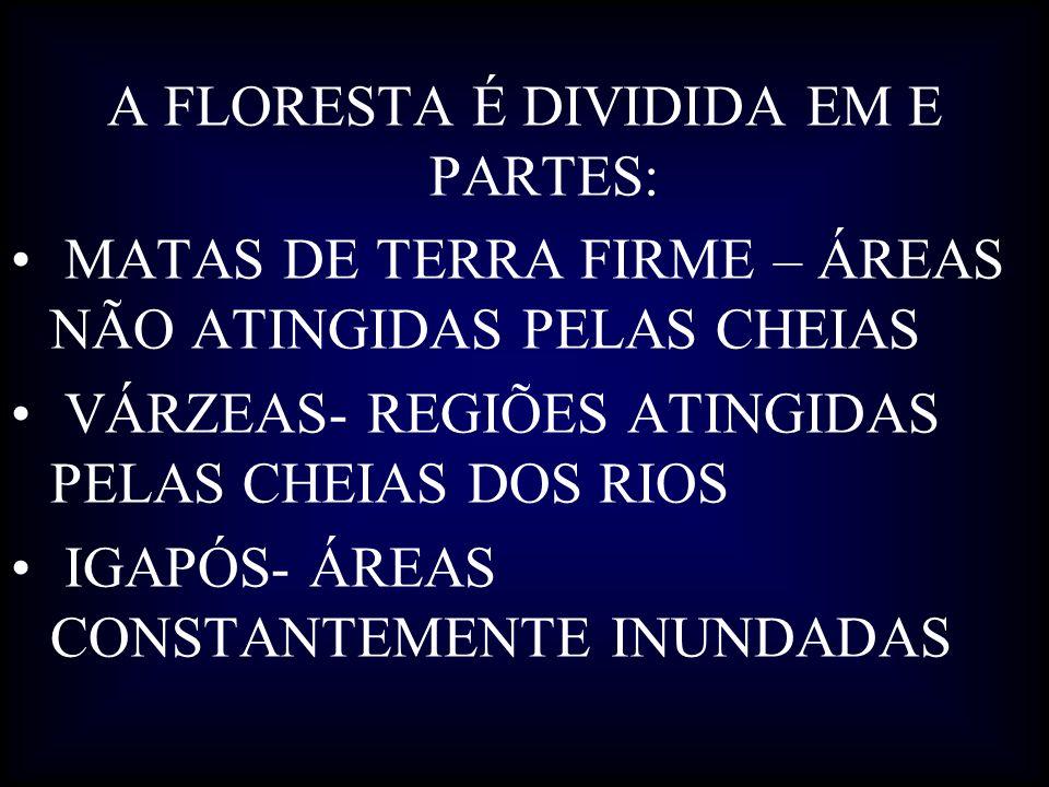 A FLORESTA É DIVIDIDA EM E PARTES: MATAS DE TERRA FIRME – ÁREAS NÃO ATINGIDAS PELAS CHEIAS VÁRZEAS- REGIÕES ATINGIDAS PELAS CHEIAS DOS RIOS IGAPÓS- ÁR