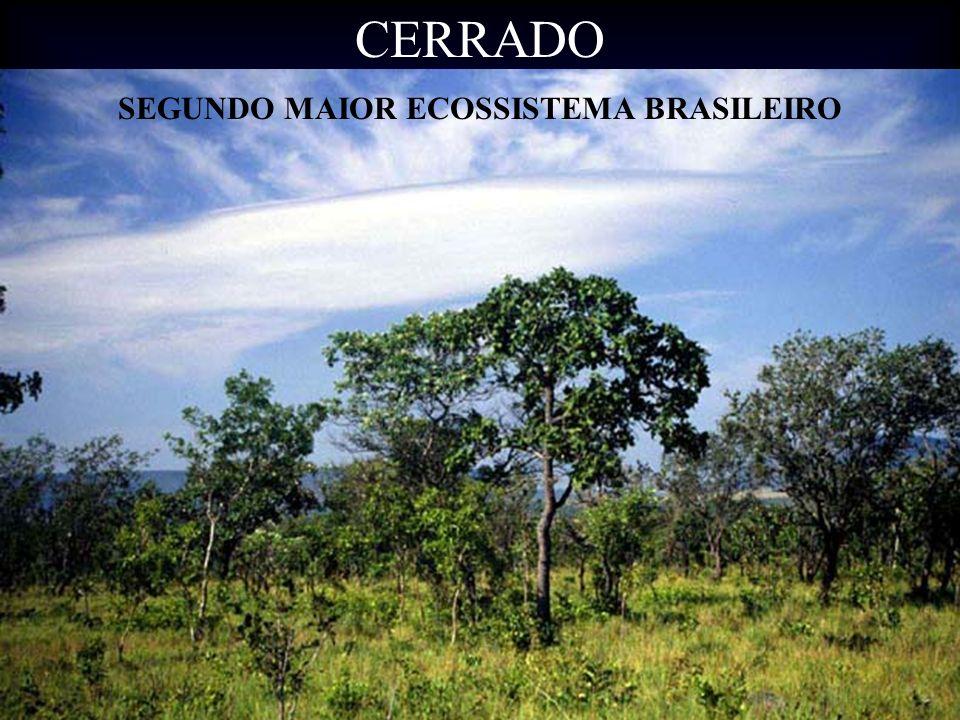 CERRADO SEGUNDO MAIOR ECOSSISTEMA BRASILEIRO