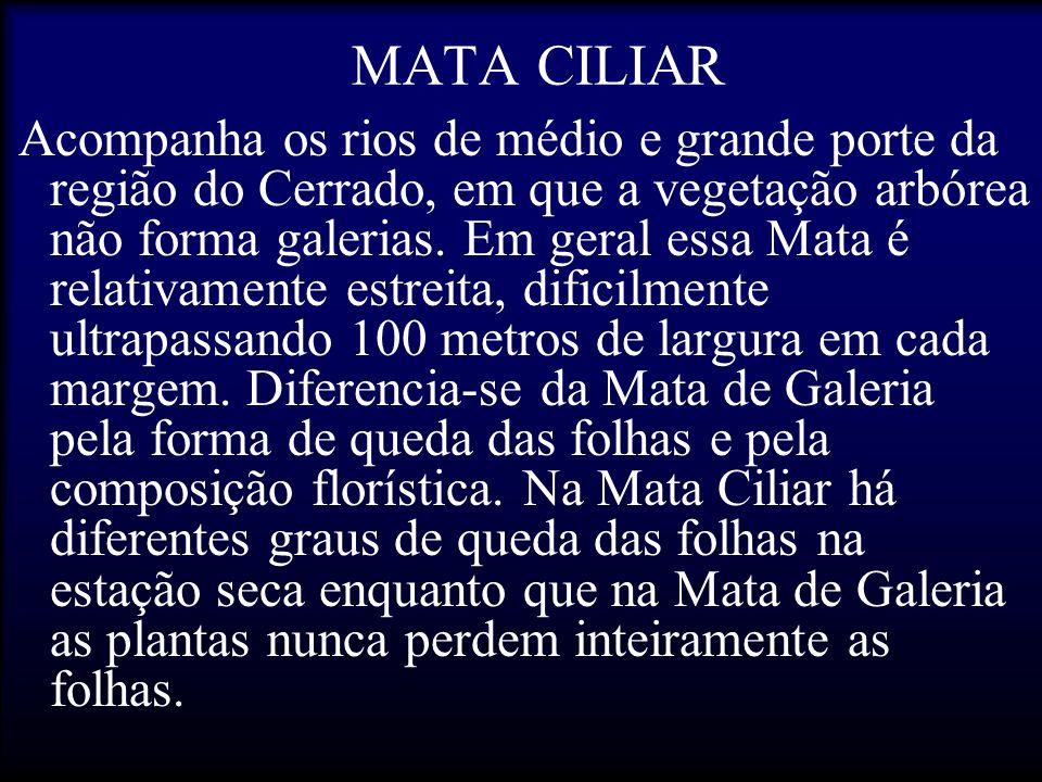 MATA CILIAR Acompanha os rios de médio e grande porte da região do Cerrado, em que a vegetação arbórea não forma galerias. Em geral essa Mata é relati