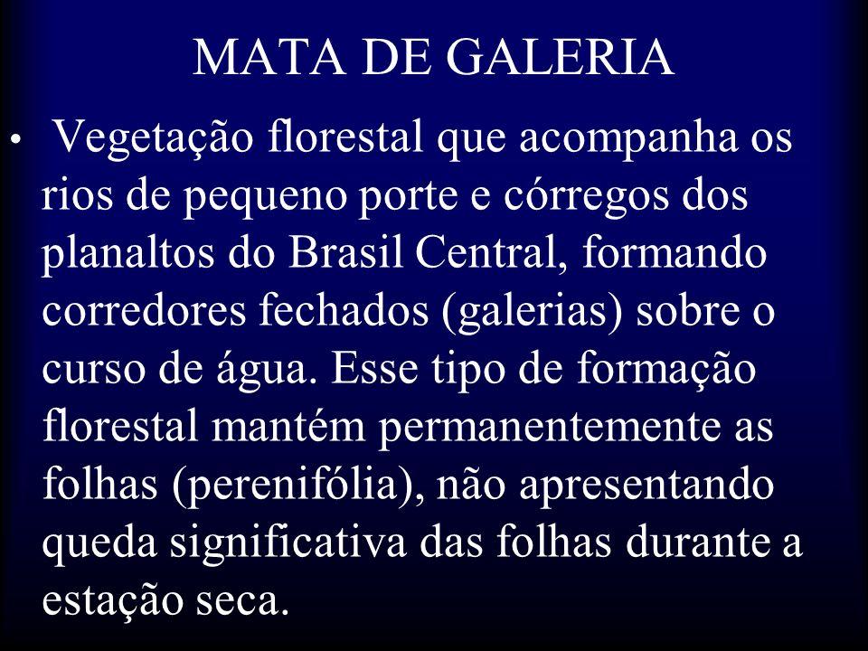 MATA DE GALERIA Vegetação florestal que acompanha os rios de pequeno porte e córregos dos planaltos do Brasil Central, formando corredores fechados (g