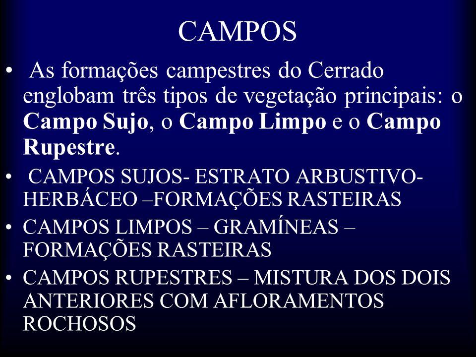 CAMPOS As formações campestres do Cerrado englobam três tipos de vegetação principais: o Campo Sujo, o Campo Limpo e o Campo Rupestre. CAMPOS SUJOS- E