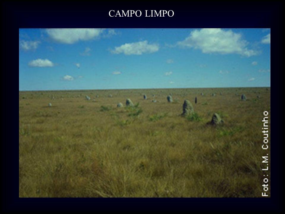 CAMPO LIMPO