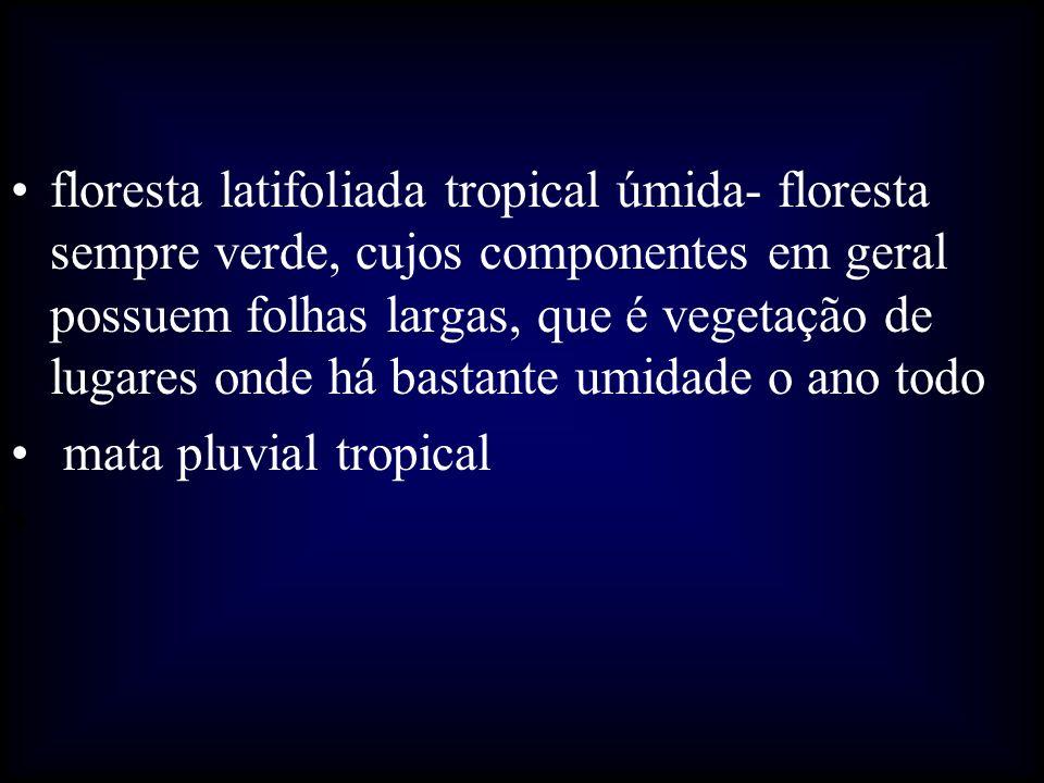 floresta latifoliada tropical úmida- floresta sempre verde, cujos componentes em geral possuem folhas largas, que é vegetação de lugares onde há basta