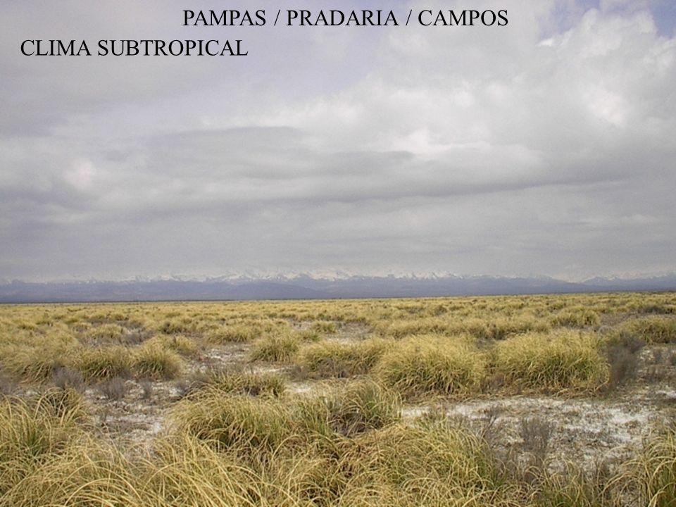 PAMPAS / PRADARIA / CAMPOS CLIMA SUBTROPICAL