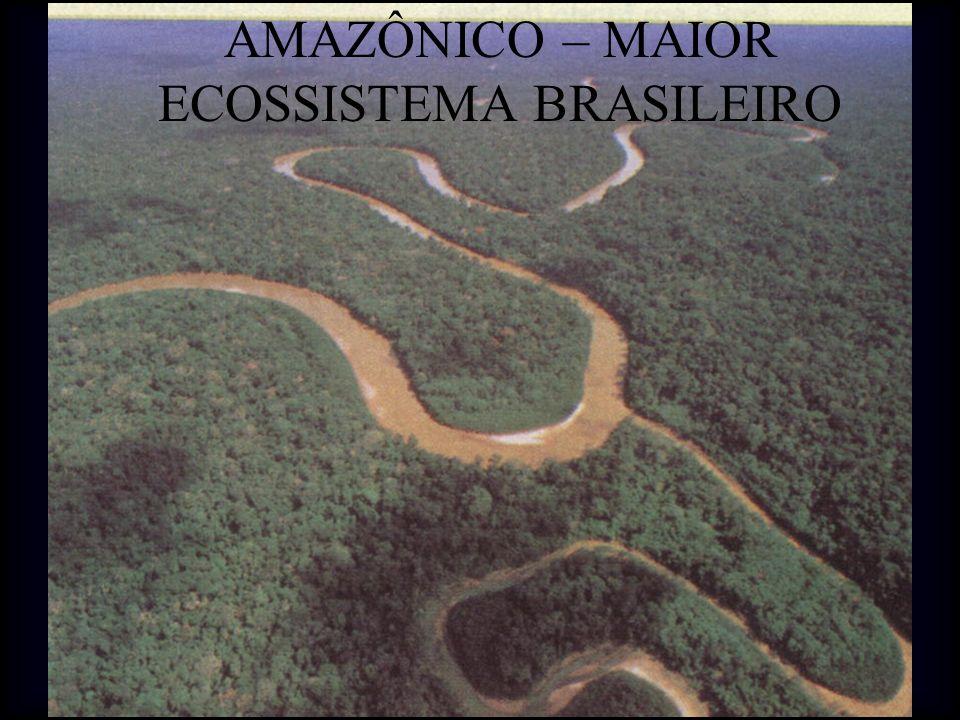 AMAZÔNICO – MAIOR ECOSSISTEMA BRASILEIRO