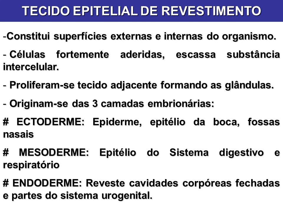 TECIDO EPITELIAL DE REVESTIMENTO -Constitui superfícies externas e internas do organismo. - Células fortemente aderidas, escassa substância intercelul