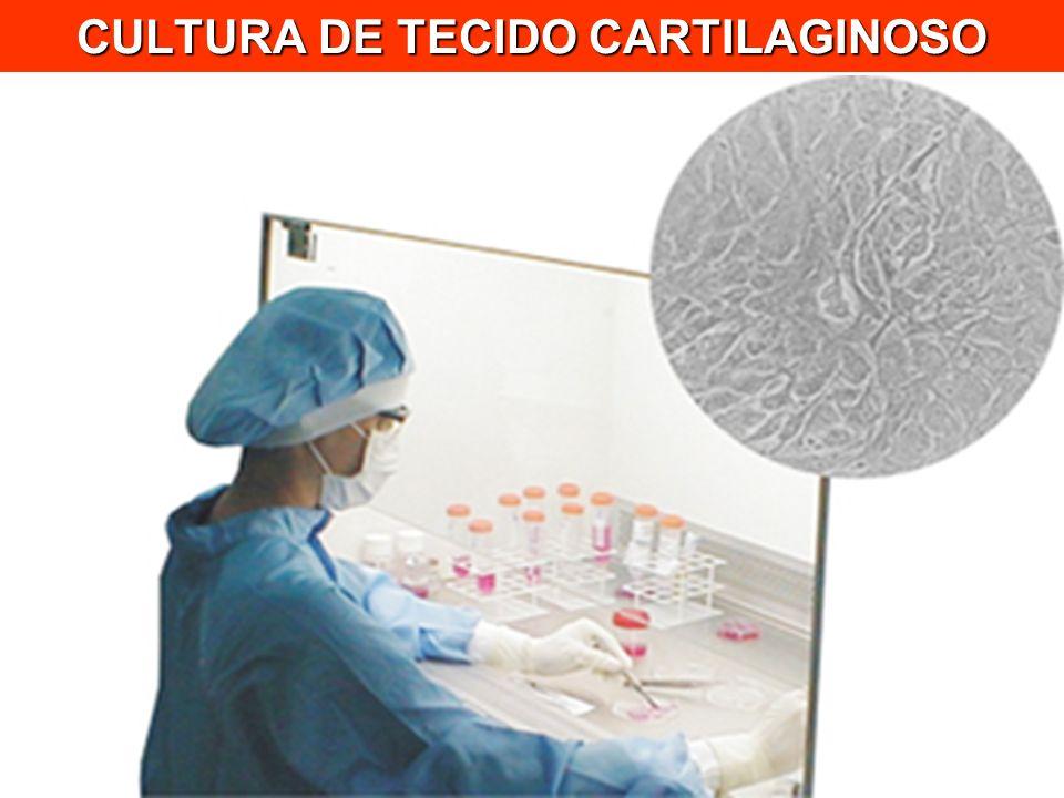 CULTURA DE TECIDO CARTILAGINOSO